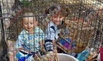 ربما ستنظرون الى هذه الصور وتستغربون وجود طفلين صغيرين داخل قفص