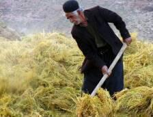 قال فريد براتي رئيس الأمانة العامة للمنظمة الإيرانية